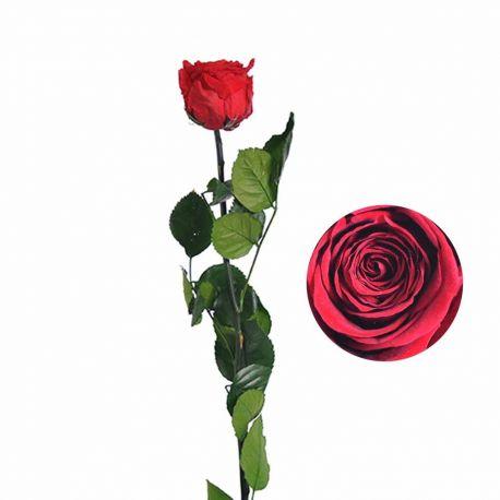 Rose préservée sur tige - rouge H55cm D4.5/6cm