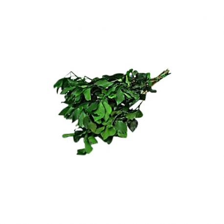 Lière Stabilisé vert x 100 gr